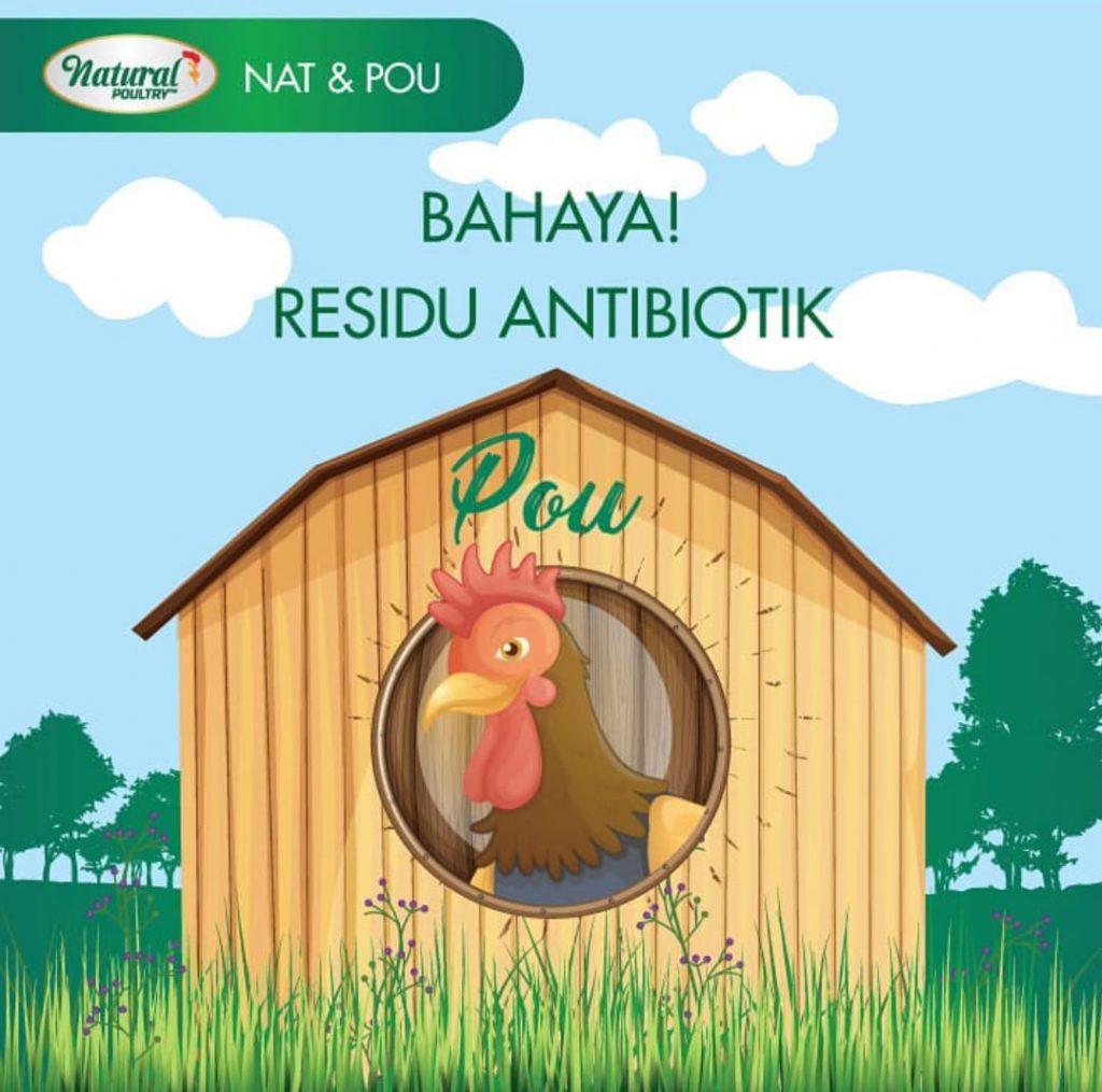 bahaya ayam antibiotik