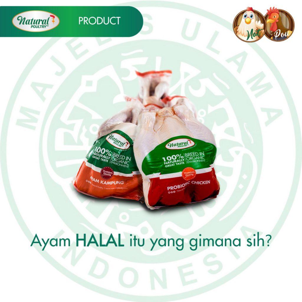 tips menentukan ayam halal