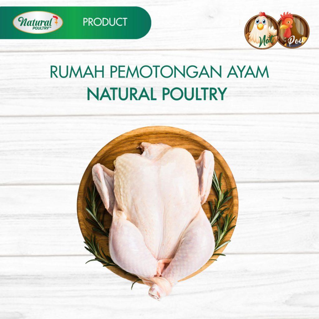 rumah potong ayam natural poultry