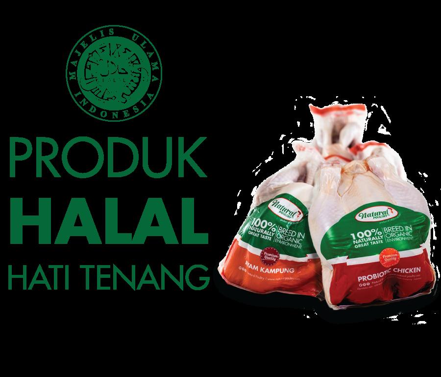 JUAL AYAM PROBIOTIK JAKARTA