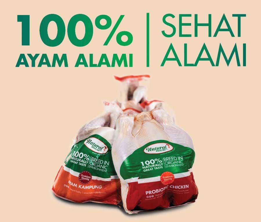 ayam probiotik & ayam organik natural poultry